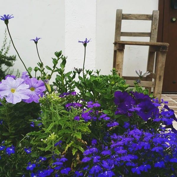 夏の花を取り入れたガーデニング実例①