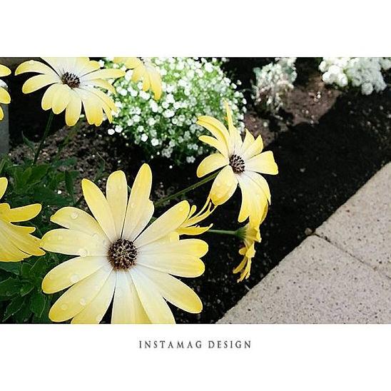 春の花を取り入れたガーデニング実例5