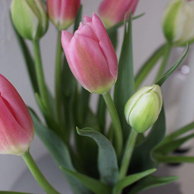 ガーデニングにおすすめの春の花