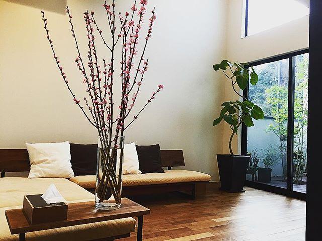 居間のインテリアとして桃の花をプラス