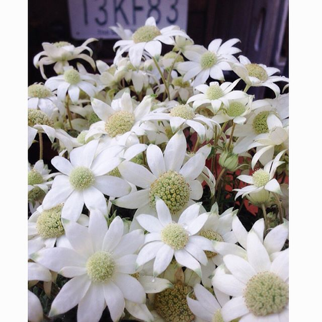 ガーデニングにおすすめの春の花7