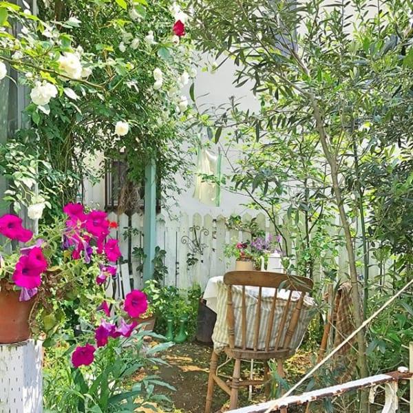 おすすめ夏の花ガーデニング実例①ペチュニア