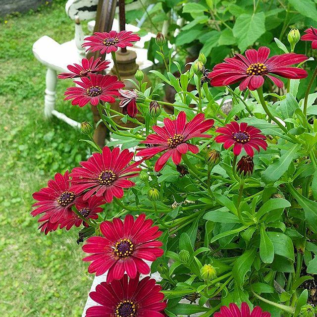 ガーデニングにおすすめの春の花6