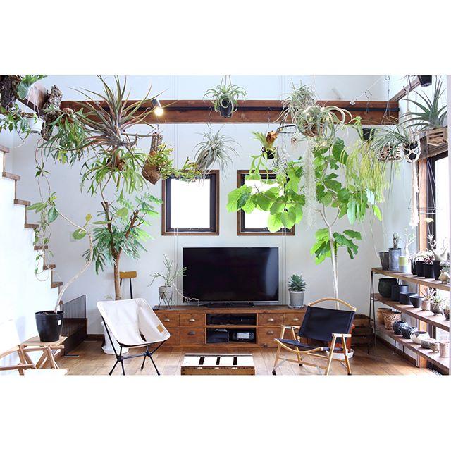 たくさんの植物に癒される空間