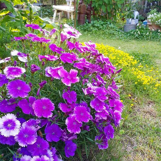 ガーデニングにおすすめの春の花4