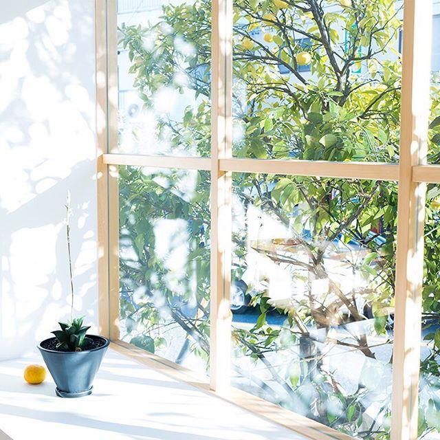 生活空間になじむ花やグリーンの飾り方ddd