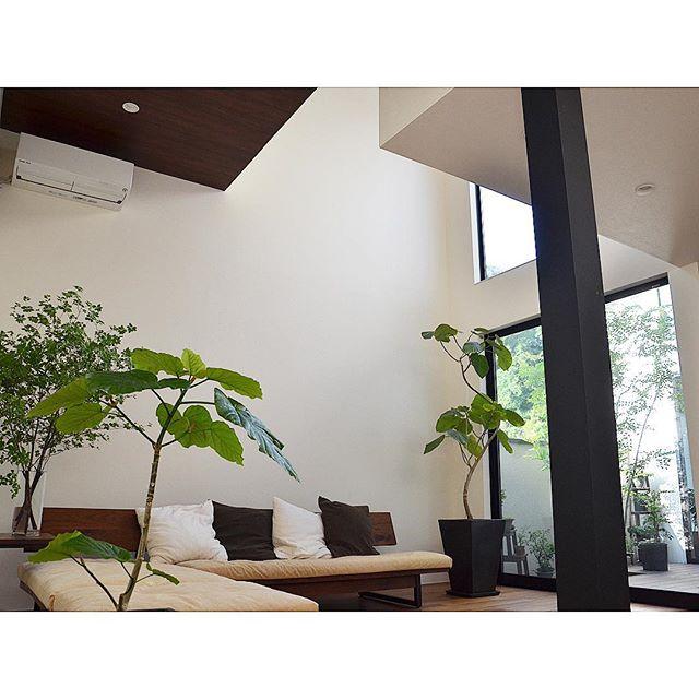 格好良い部屋に合うインテリア植物の飾り方