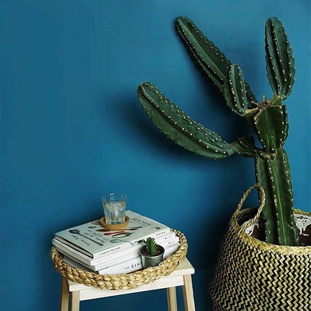 インテリア植物の夏らしい飾り方