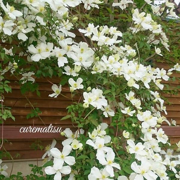 夏の花を取り入れたガーデニング実例④