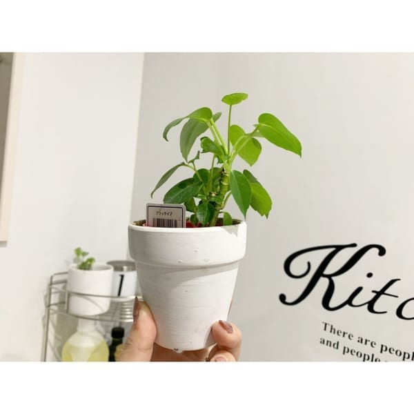 植物と園芸アイテム