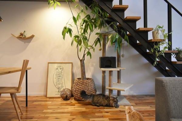 猫 暮らす インテリア15