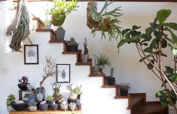 階段を生かしたグリーンのディスプレイスペース