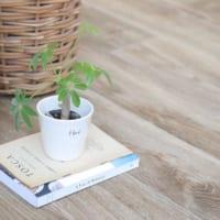 【キャンドゥ】の植物と園芸アイテム!みずみずしいフレッシュグリーンを日常に♪