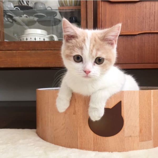 猫 暮らす インテリア
