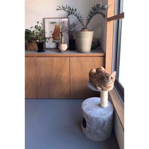 猫 暮らす インテリア4
