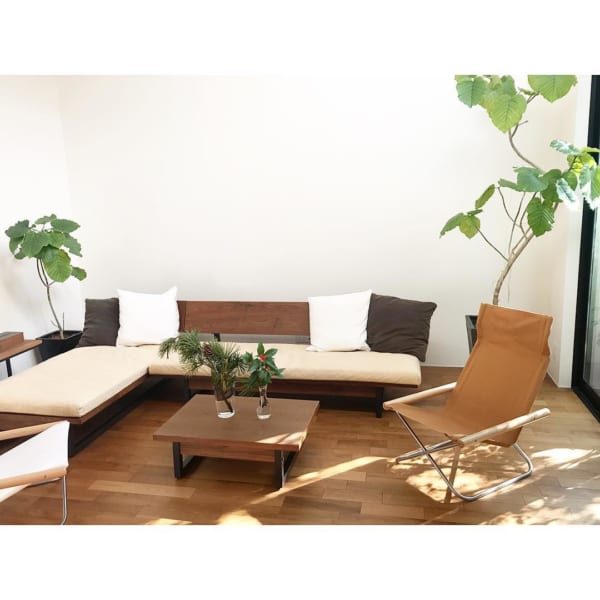 大きな観葉植物と家具のバランスが◎