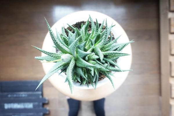 植物と園芸アイテム6