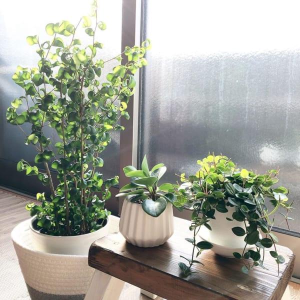 植物と園芸アイテム2
