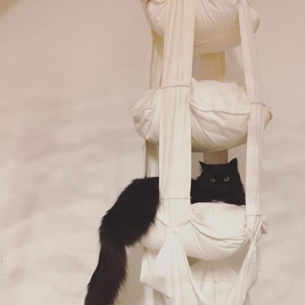 猫 暮らす インテリア11