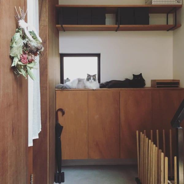 猫 暮らす インテリア13