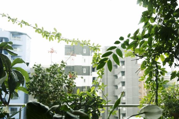 高台の眺望と豊かな緑が魅力。落ち着きのある「御留山」の暮らし。6