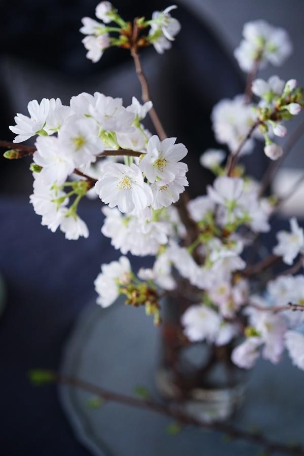 桜と春の花の活け方6