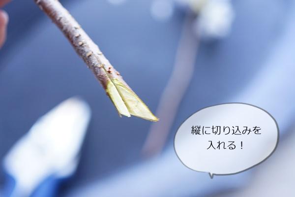 桜と春の花の活け方5