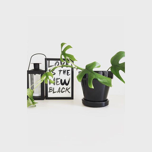 かっこいい観葉植物のディスプレイ方法