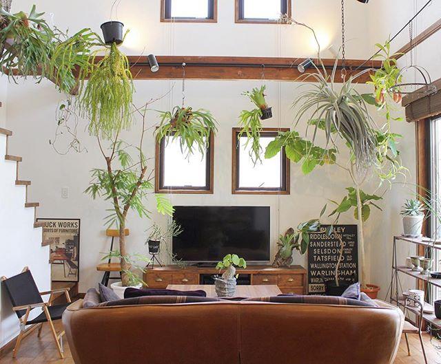 おしゃれな観葉植物12