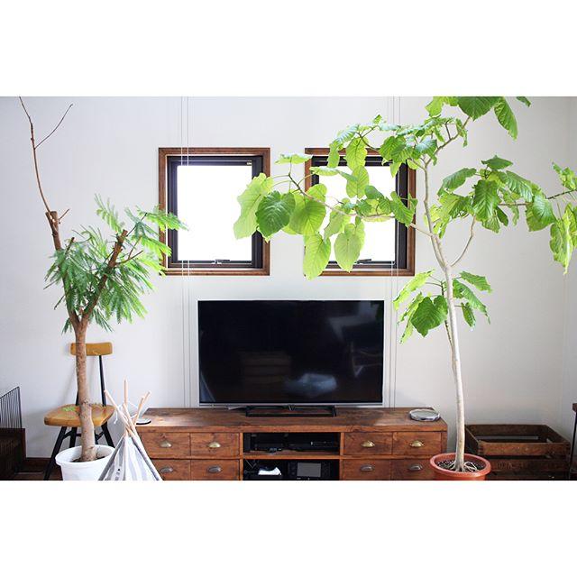 おしゃれな観葉植物9