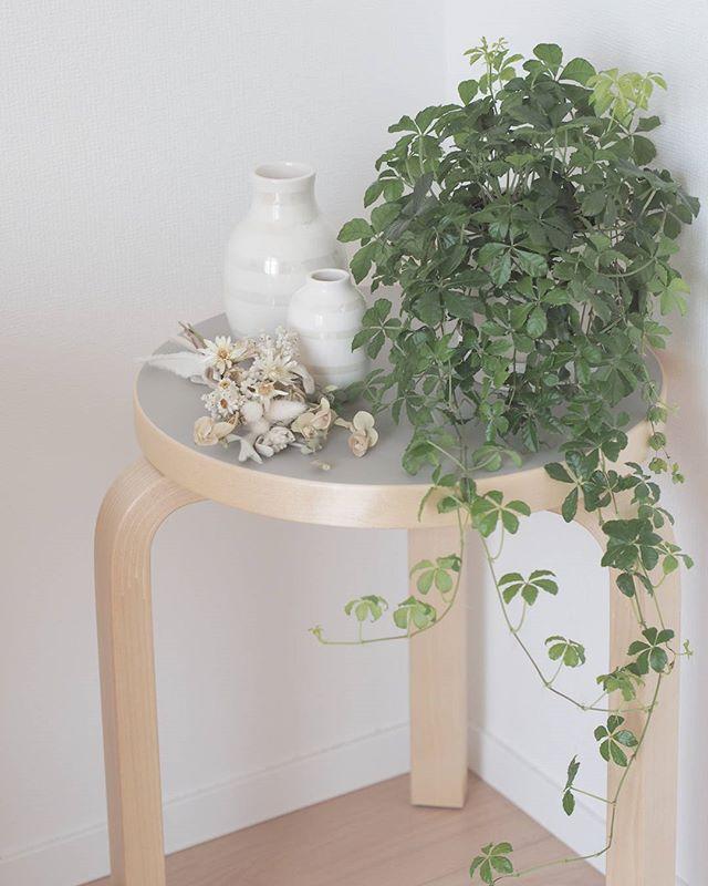 観葉植物をスツールに載せる人気の飾り方