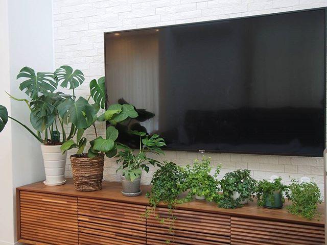一人暮らしにおすすめの観葉植物《モンステラ》4
