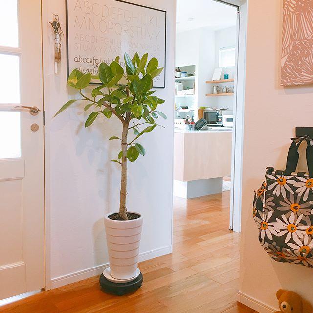 育て方が簡単な玄関に似合う大きい人気植物