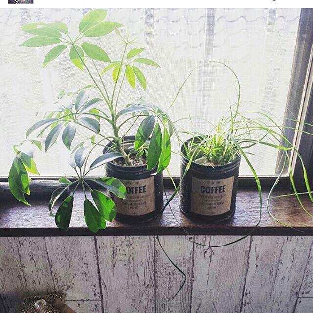 おしゃれな観葉植物14