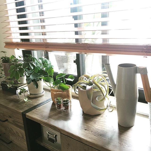 リビングにおすすめの観葉植物《ポトス》
