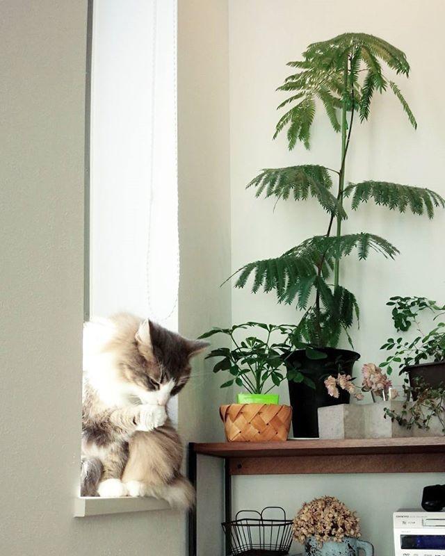 おしゃれな観葉植物15