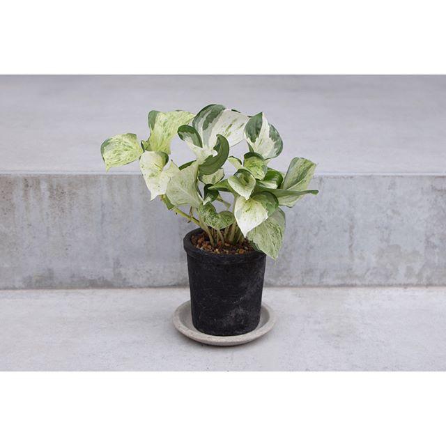 屋外玄関のインテリアになるおすすめ植物