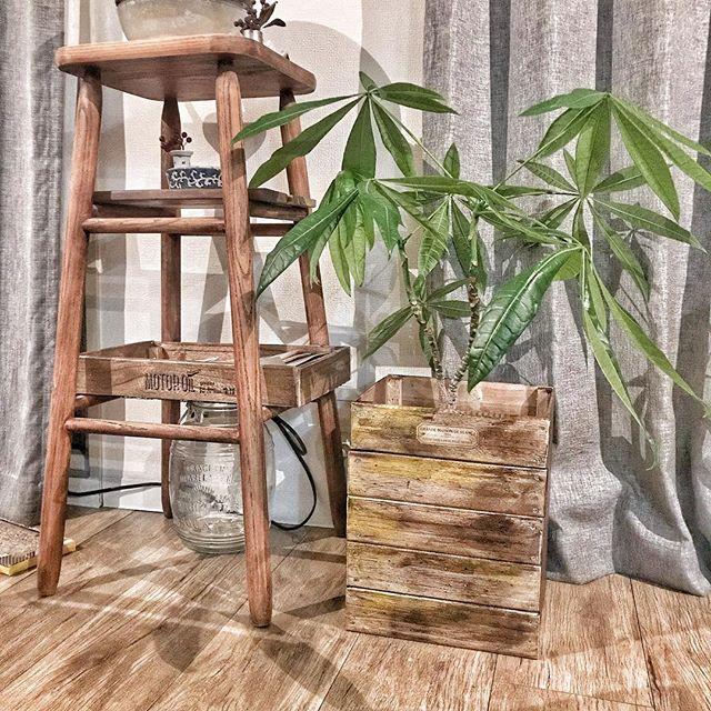 リビングにおすすめの観葉植物《パキラ》4