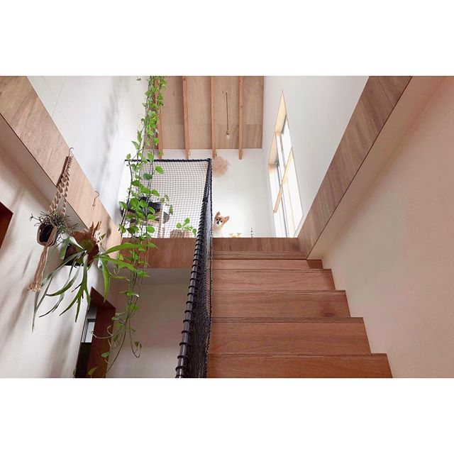 玄関でも簡単に育てやすい観葉植物