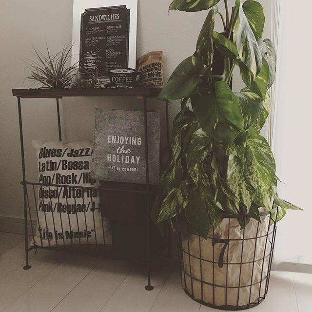 リビングにおすすめの観葉植物《ポトス》5
