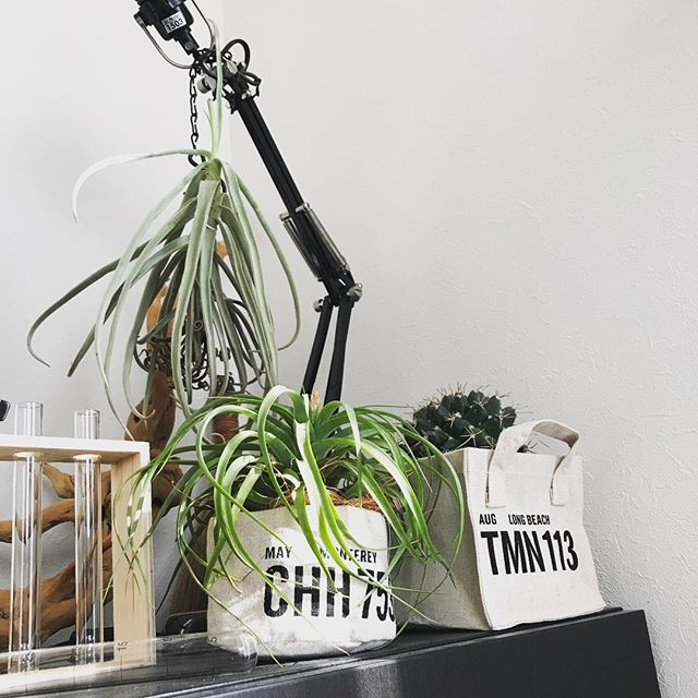 一人暮らしにおすすめの観葉植物《サボテン》