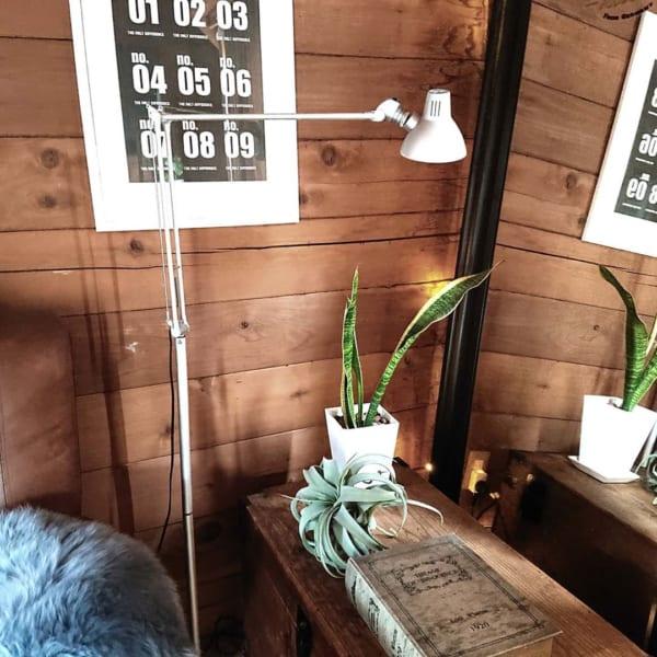 ダイソーの観葉植物4