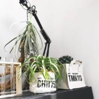 一人暮らしにおすすめの観葉植物まとめ♪初心者でも育てやすい人気グリーンをご紹介