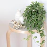 玄関に人気の観葉植物まとめ!おしゃれで育てやすいおすすめのグリーンを飾ろう♪