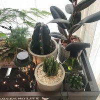 【ダイソー】は観葉植物も豊富に揃う!グリーンを飾って爽やかなお部屋作り☆