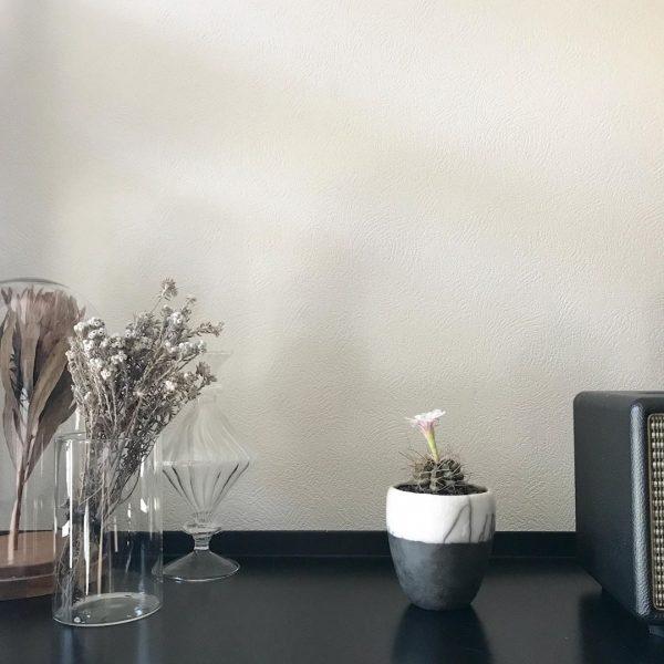 ダイソーの観葉植物7