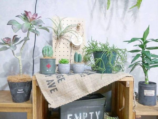 おしゃれにディスプレイしたダイソーの観葉植物