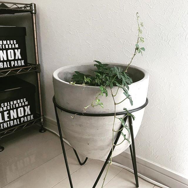 セメント鉢のある空間3
