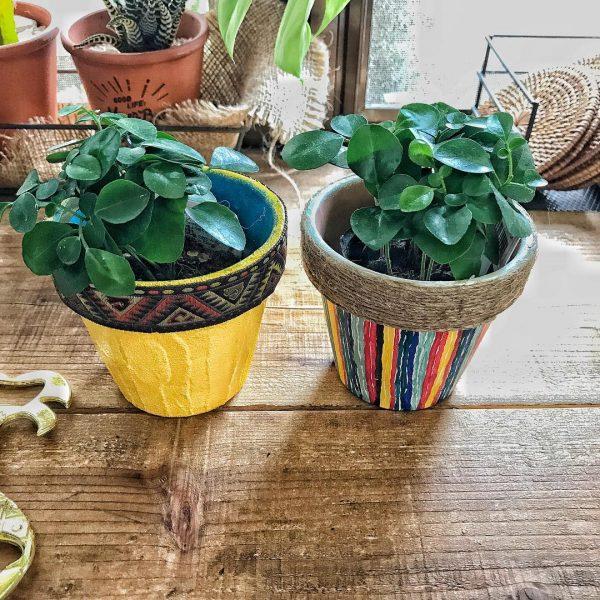 ダイソー 観葉植物4