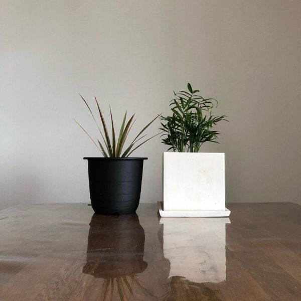 観葉 2020 ダイソー 植物